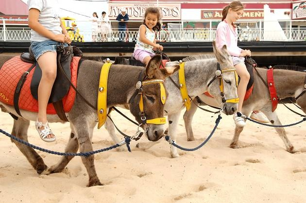 donkey ride great yarmouth beach